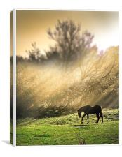 Morning pasture, Canvas Print