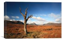 Lone tree, Rannoch moor, Canvas Print