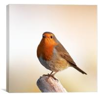 Robin redbreast, Canvas Print