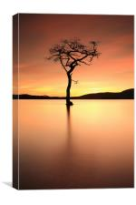 Lone Tree Afterglow, Canvas Print