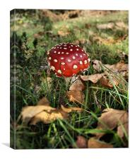 Toadstool, Canvas Print