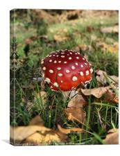 I'm a little Toadstool, Canvas Print