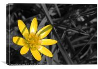 buttercup yellow, Canvas Print