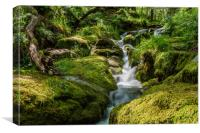 Dartmoor's little secret, Canvas Print