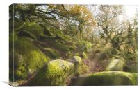 The Magical Wistmans Wood, Canvas Print
