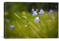Country Meadow, Canvas Print
