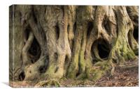 Scary tree roots , Canvas Print