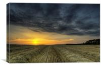 Harvest on Braunton Great Field North Devon, Canvas Print