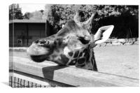 Monochrome Giraffe, Canvas Print