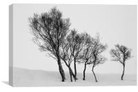Winter Trees in a Field of Snow, Canvas Print