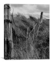 barbed wire fence and grass, Canvas Print