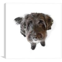 Hairy Dog Photographic Caricature, Canvas Print