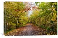 Pathway through Sunlit Autumn Woodland Trees, Canvas Print