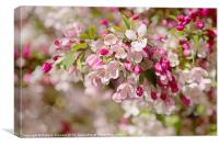 Beautiful Blossom, Canvas Print