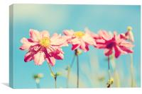 Sunlit Anemone Flowers with Cross Processed Effect, Canvas Print