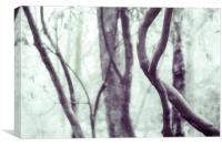 Woodland Photographic Artwork, Canvas Print