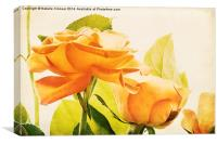 Orange Roses, Canvas Print