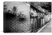 Outhouses All in a Row - Black and White, Canvas Print