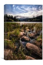 Loch Ard From the Reedbed, Canvas Print