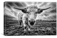 Cadzow White Cow Female, Canvas Print