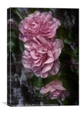 Frosted Camellias, Canvas Print