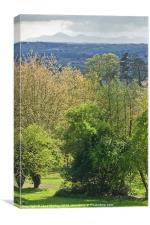 Scrabo Country Park, County Down, Canvas Print