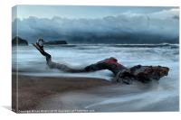 Washed up tree Saltwick bay, Canvas Print