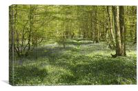 Path among the bluebells, Canvas Print