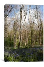 bluebell woods 3, Canvas Print