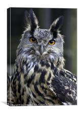Gandalf the Eagle Owl, Canvas Print