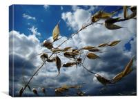 blowin' in the wind, Canvas Print
