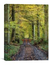 autumn forest path, Canvas Print