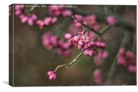 common spindle, Canvas Print