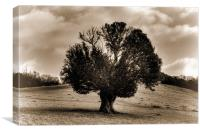 Lone Yew Tree, Canvas Print