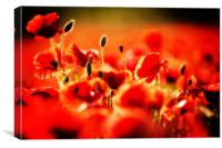 dreaming of poppies, Canvas Print