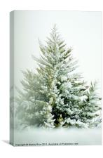 Snow covered tree branches, Canvas Print