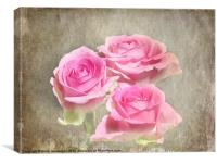 Trio of Pink Roses, Canvas Print