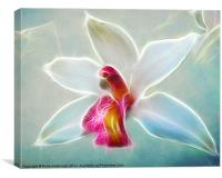Orchid Blues, Canvas Print