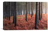 Burnt Bracken, Canvas Print