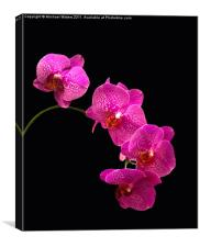 Simply Beautiful Purple Orchids, Canvas Print