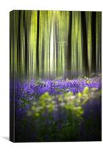 BlueBell Woodland , Canvas Print