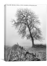 TREE IN THE MIST, Canvas Print