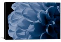 Chrysanthemum, Light Blue, Canvas Print
