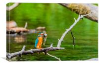 Kingfisher , Canvas Print