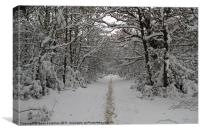 Snowy Walk in the Woods, Canvas Print