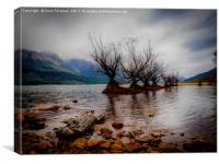 Glenorchy Willow Trees, Canvas Print