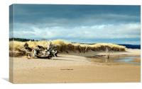 Tentsmuir Dunes, Canvas Print