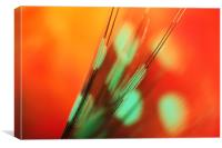Feather Abstract in Orange, Canvas Print