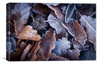 Frosted Autumn Leaves, Canvas Print