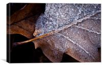 Frosted Oak Leaf, Canvas Print